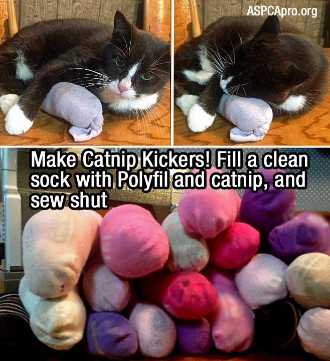 19 More Life Hacks Animal Shelters Can't Live Without | ASPCA Professional