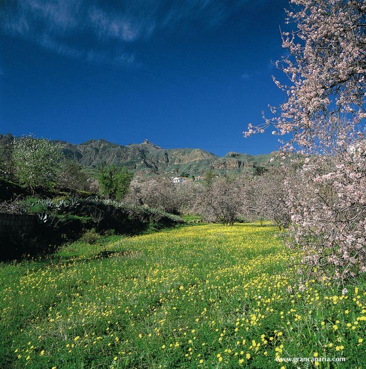 The beauty of Gran Canaria: Barranco de Guayadeque