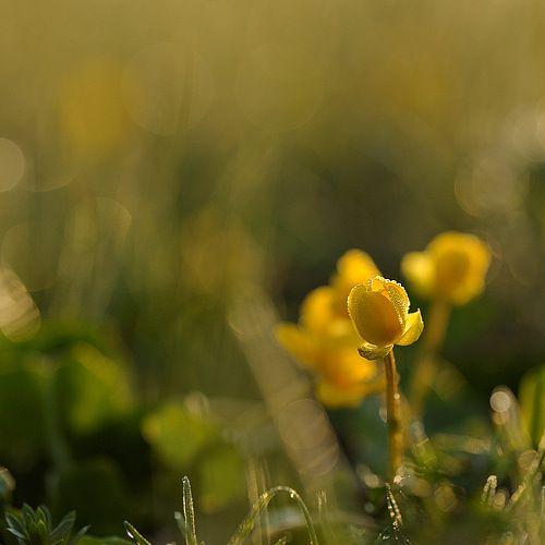 Андрей Балабин - фотографии. 35фото