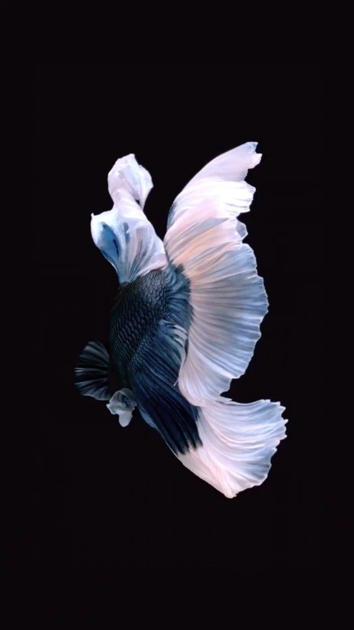 Pin By Bella On Pet Stuff Live Fish Wallpaper Fish Wallpaper Iphone Fish Wallpaper