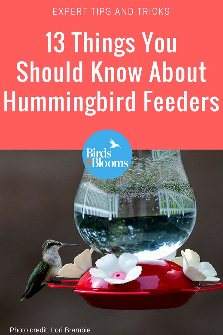 13 Questions About Hummingbird Feeders Answered By The Pros Humming Bird Feeders Hummingbird Homemade Bird Feeders