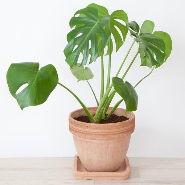 25 Best Ideas About Tropical House Plants On Pinterest