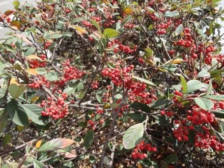Un ramo con bayas rojas puede ser ideal para una boda de estilo rural o vintage