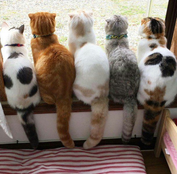 What a beautiful group of cats