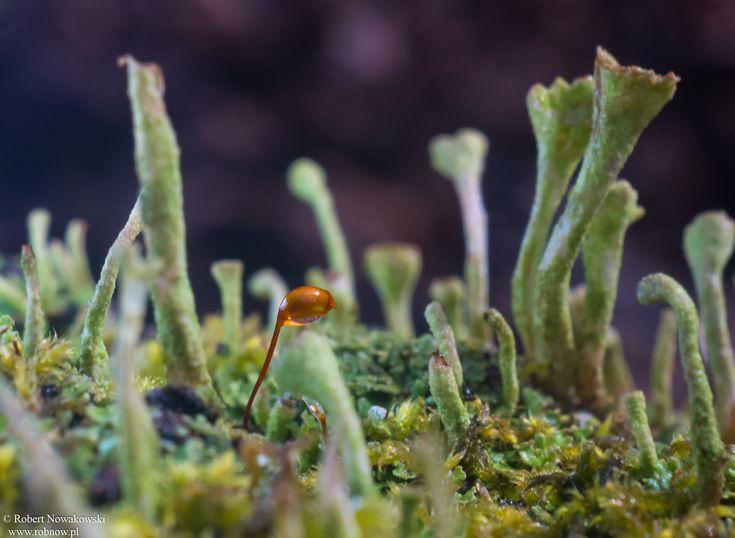 Na dnie lasu... przedwiośnie ... | Robert Nowakowski - Fotografia
