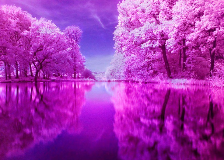 Wow.Water, Cherries Blossoms, Purple, Pink Trees, Nature Pictures, Rainbows Cake, Flower Gardens, Beautiful Pictures, Infrared Photography