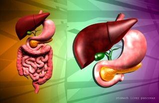 """""""Wanneer er iets mis is met bijvoorbeeld de productie van verteringsenzymen van de alvleesklier en/of de dunne darm dan kan dit na het eten van koolhydraten leiden tot; diarree, een opgeblazen gevoel en winderigheid..."""" Kom hier te weten te komen over de functie van koolhydraten; hoe ze worden verteerd; wat er mis kan gaan gedurende de vertering en welke koolhydraten veilig zijn om te eten…"""