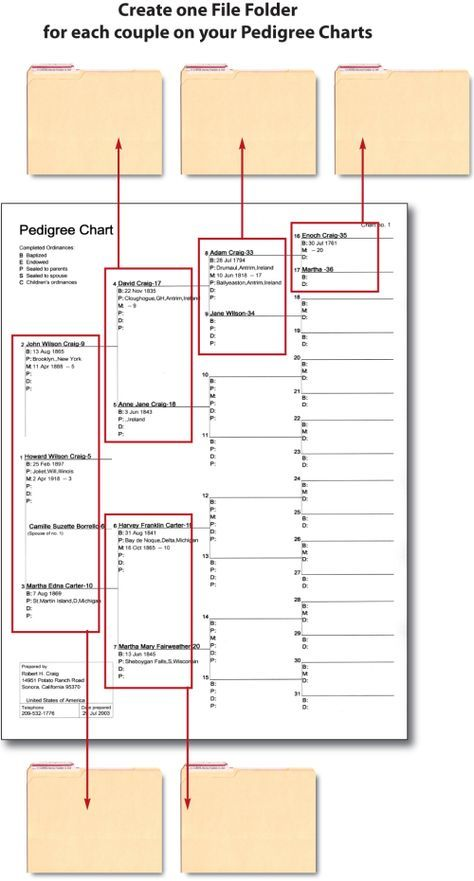 25 unique pedigree chart ideas on pinterest genealogy