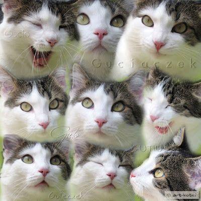 art-kotki: Model pierwsza klasa ;) Gucio