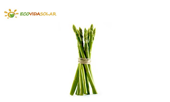 Espárrago (Asparagus officinalis) - propiedades del Espárrago