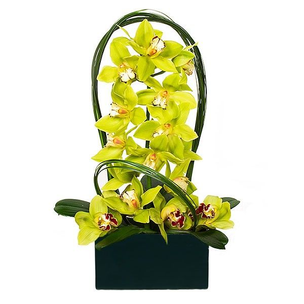 PlantShed.com | Fabulous | Flower Delivery NYC | Bright Green Orchids in Black Ceramic