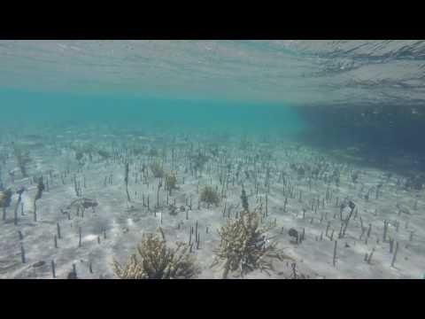 Mangrove Magic: Snorkeling at Whangateau Estuary NZ