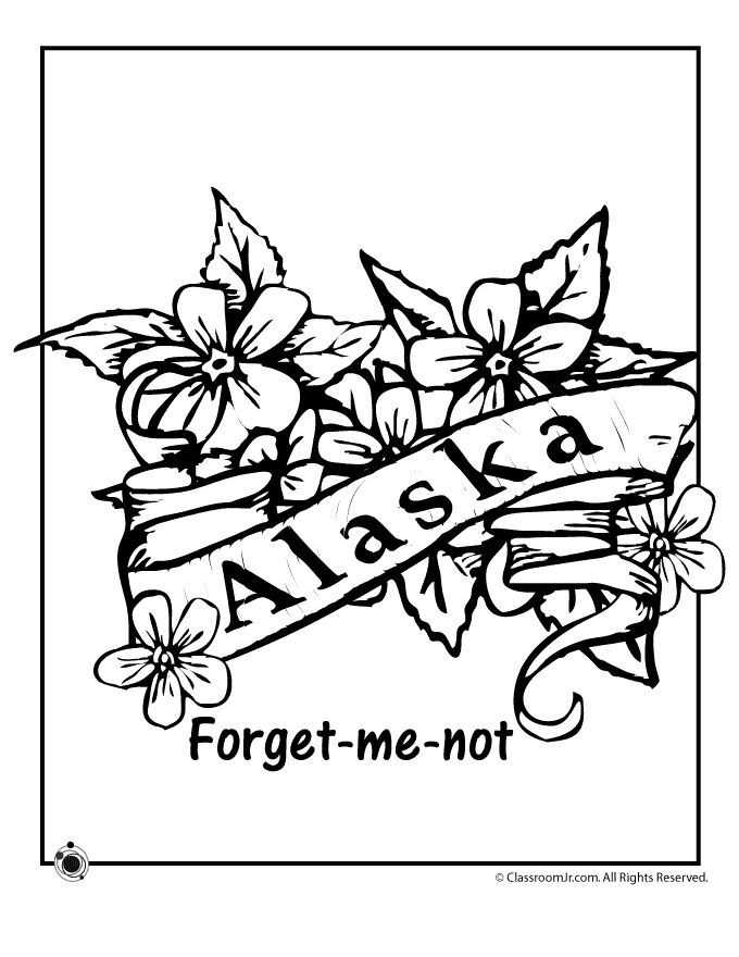 State Flower Coloring Pages Alaska Page Classroom Jr