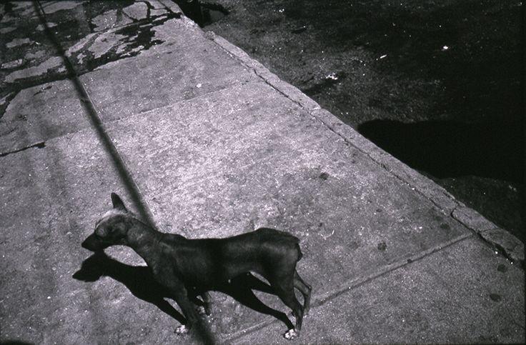 un chien, délaisse.