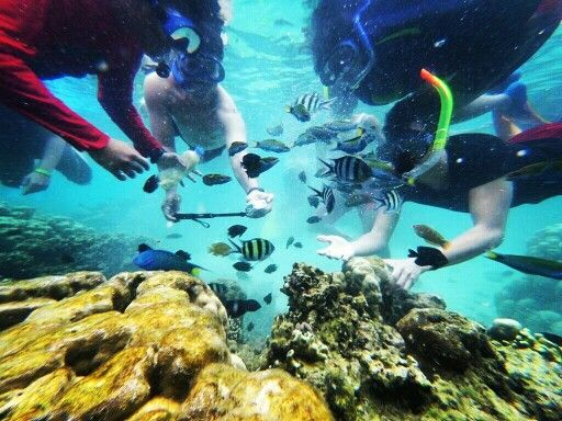 Snorkeling with rainbow fish