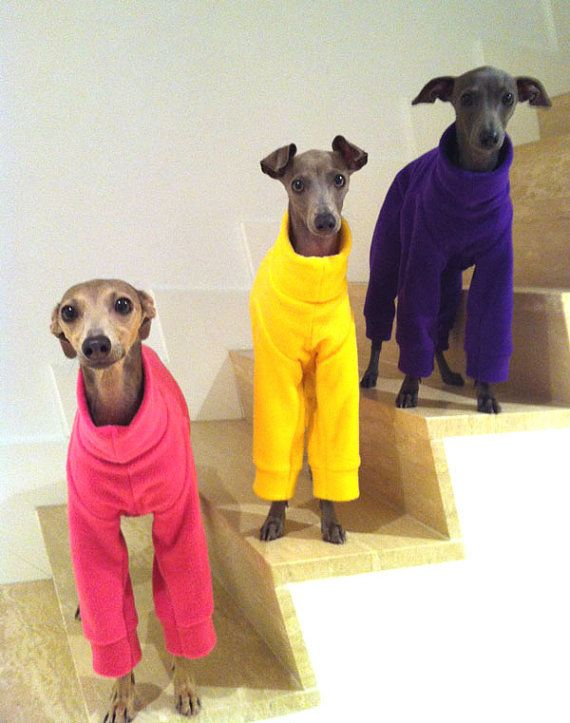 Made to order Plain Colour/Color Fleece Jammies/Pajamas for Italian Greyhounds      HOW TO ORDER - 1. Measure your dog - using the chart pictured
