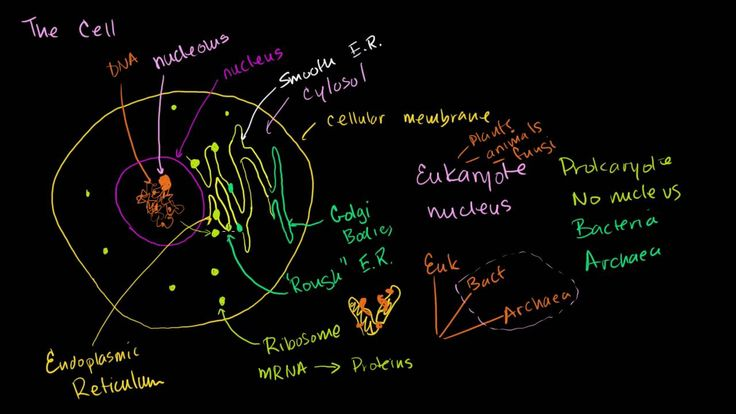 Overview of Cell Organelles