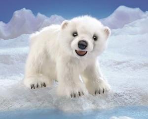 Folkmanis 3041 Bear, Polar Cub - Peazz.com