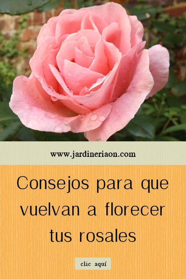 18++ Cuando florecen las rosas trends