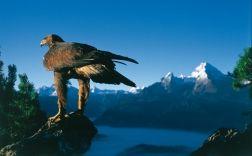 Der Nationalpark Berchtesgaden - Heimat der Steinadler und vieler weiterer Tier- und Pflanzenarten