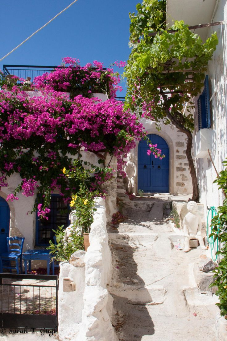 A house with pink flowers and a blue door in Crete, Greece ✯ ωнιмѕу ѕαη∂у