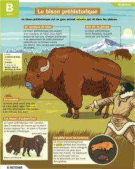 Le bison préhistorique - Mon Quotidien, le seul site d'information pour les 10-14 ans !