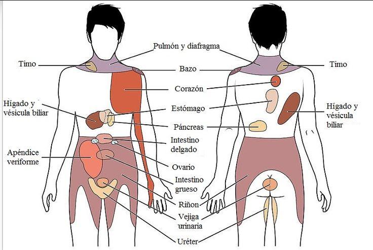 From Wikiwand: Dolor referido: Percepción y conciencia de sensaciones visceral se pueden mapear a ciertas regiones del cuerpo, como esta gráfica demuesa. Algunas sensaciones se sienten en el mismo sitio mientras otras se perciben como que afectan áreas que son alguna distancia del órgano responsable.