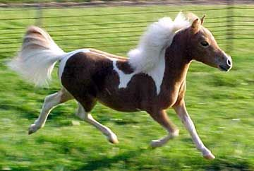 Horse Photo:  This Photo was uploaded by sunshinealbums. Find other Horse pictures and photos or upload your own with Photobucket free image and video ho...