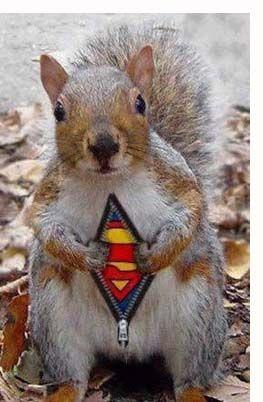 Squirel become superhero #Let'sMoveOn