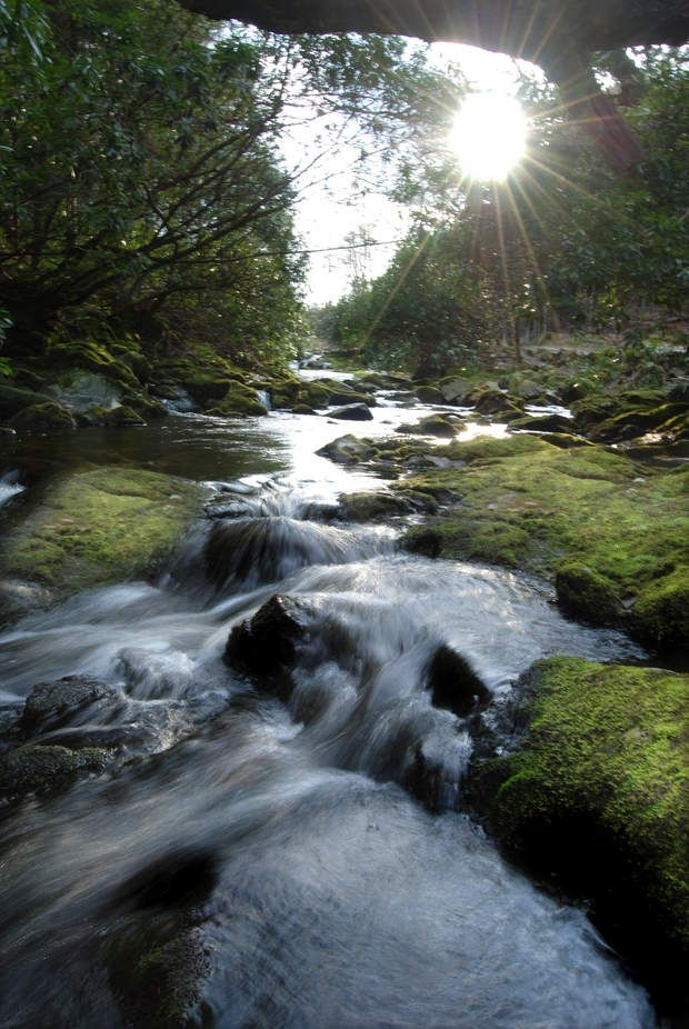 Tollymore Forest Castle, en Irlande du Nord = Forêts du Nord>>> Découvrez notrecarte interactive du monde de Game of Thrones