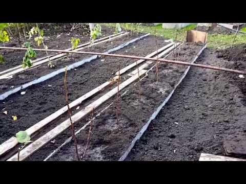 Грядки для малины. www.globusbm.com - YouTube