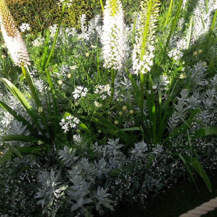 Silver and white planting