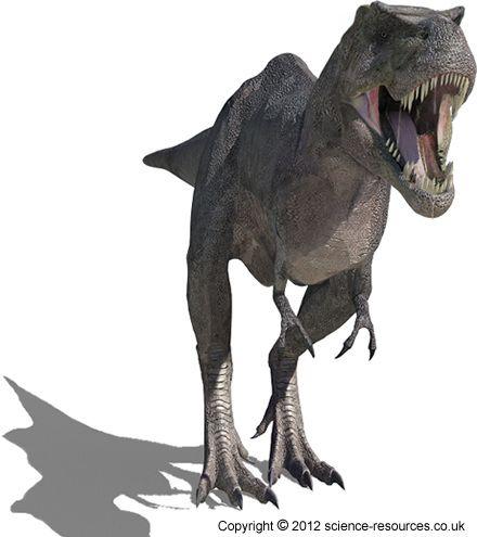 How big was T-rex?
