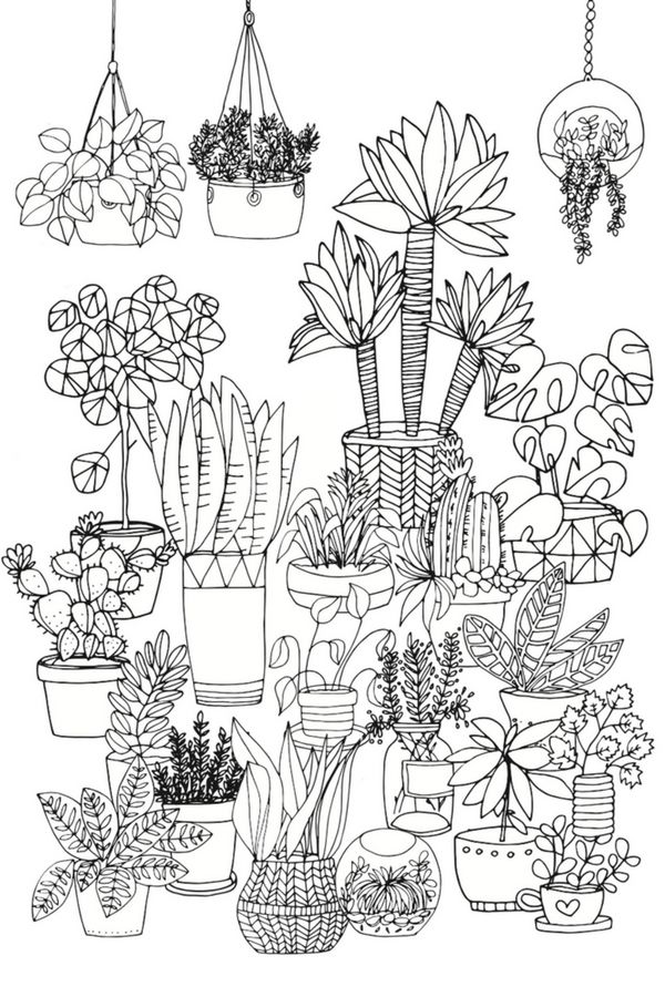 pflanzen zeichnen f r anf nger zeichnen f r anf nger. Black Bedroom Furniture Sets. Home Design Ideas