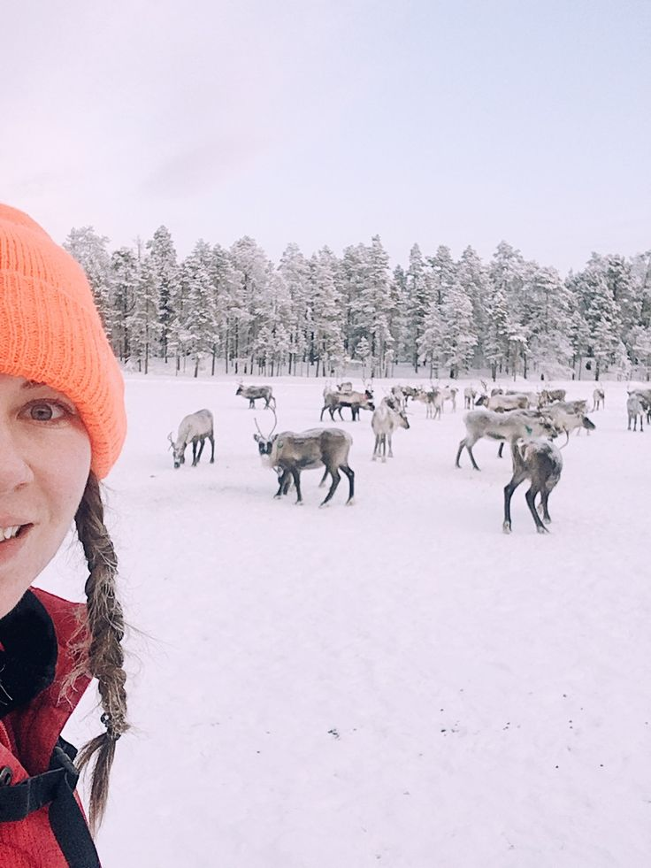 ※ I can not forgive myself for not putting a selfie with reindeers  to take the pictures I have frostbitten two fingers, because the took off the gloves when it was freezing and temperature was 28 degrees below zero was not the wiser thing, but the second such an opportunity could not be repeated. You have to grab opportunities and take them  Take more and more from life!