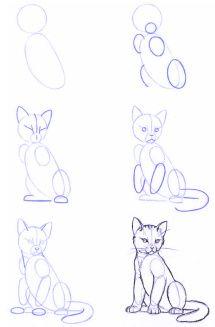 Dibujo_estructura-animales-01