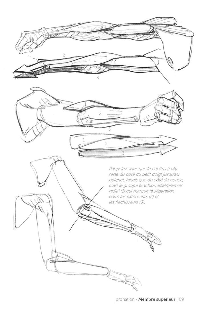 morpho anatomy for artists review