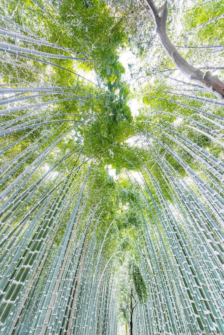 Bamboo Path in Arashiyama, Kyoto, Japan | Takahiro Bessho