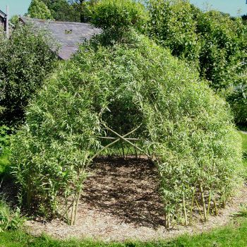 Buy Living Willow Structures – Dome – TeePee |