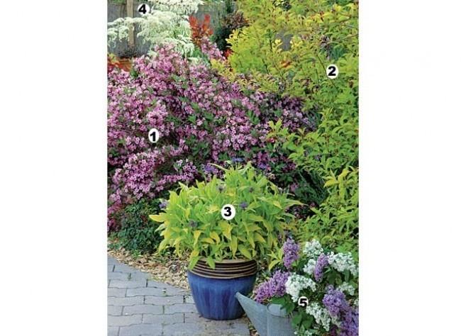 41 best jardin massif images on pinterest plants. Black Bedroom Furniture Sets. Home Design Ideas