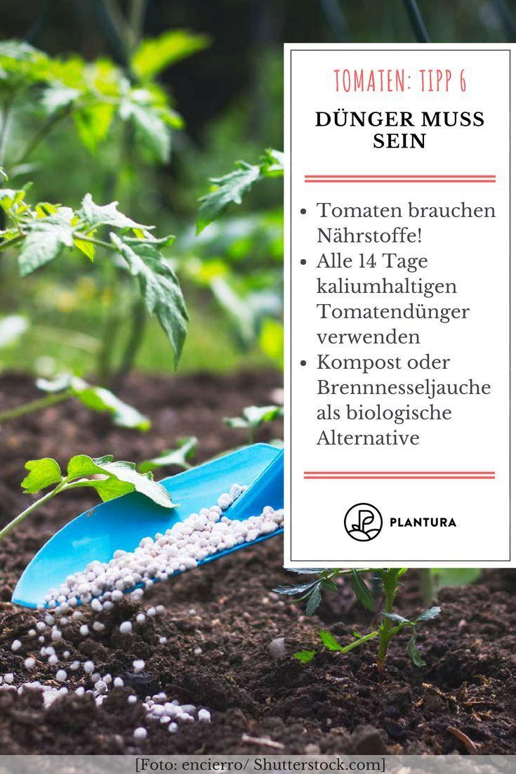 10 Tipps Zur Perfekten Tomate Aus Dem Eigenen Garten Tomaten Tipp 6 Dunger Muss Sein Ab Der Blutenbildung Bra Tomaten Garten Tomaten Pflanzen Gartenprodukte
