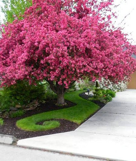 A little fun in the garden     source   a whimsical path of grass under a shocking pink tree creates    a Seuss-like landscape     source  ...