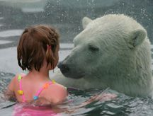 Cochrane Ontario swim with polar bears. That's freaky cool. I don't think I have the guts for it no matter how thick the glass is.