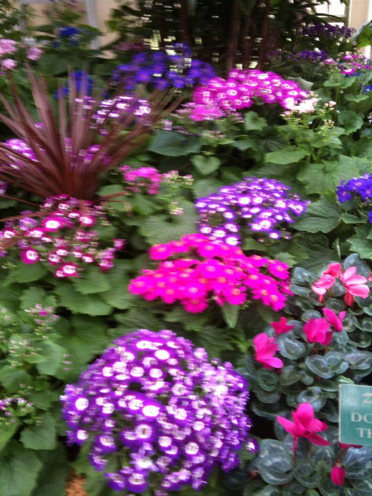 Carlton Gardens, Melbourne #CarltonGardens #Melbourne #Beauty #Flowers #Nature