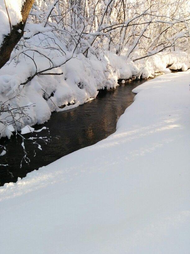 The brook in my backyard