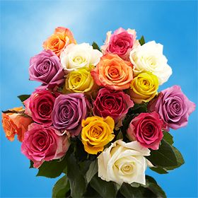 Rose Sh Assorted (QB) [Include Flower Food] (OM)