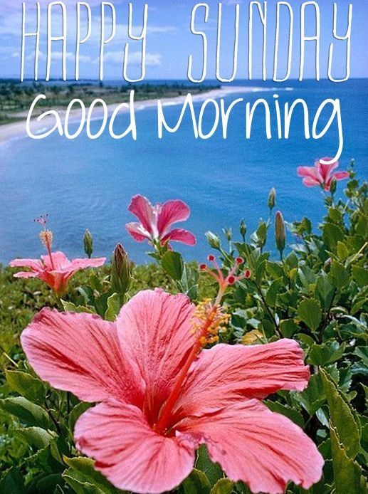 Happy Sunday and Good Morning to ALL my Pinterest pals and followers from Florida! Debby :) ♡ ♡ ♡