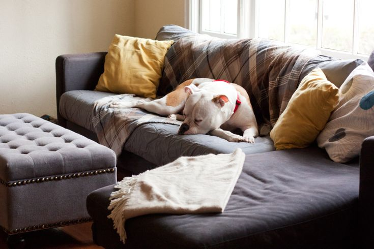 best 25 dog couch cover ideas on pinterest pet couch cover diy sofa cover and slip covered sofa. Black Bedroom Furniture Sets. Home Design Ideas