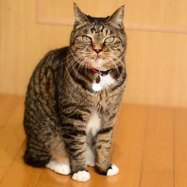(`・ω・´)キリッ . #看板猫 くぅちゃん♡ #猫好きさん にはたまらにゃい  #最高の癒しをご提供 します ・・・(*ˊૢᵕˋૢ*) . #愛猫 #フェイシャルエステ #フェイシャル専門 #石川県 #白山市 #ホームエステ #癒し .
