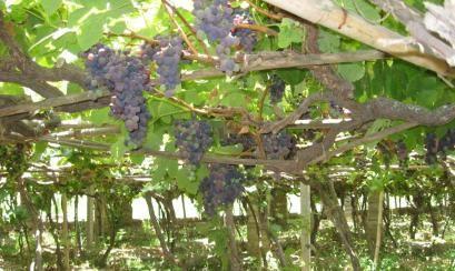 Valparaíso & Valle de Casablanca: Ingresan a Red Mundial Capitales del Vino   América Economía - Abril 24, 2013